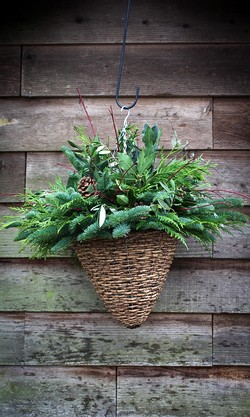 Holiday Greens Hanging Basket